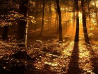Autumn_Forest_in_the_Sun